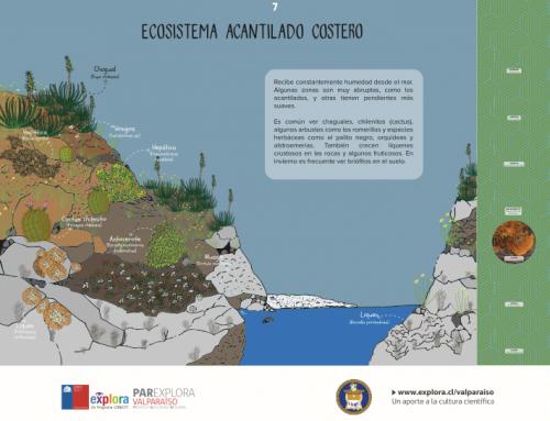 Ecosistema acantilado costero