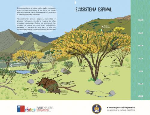 Ecosistema espinal